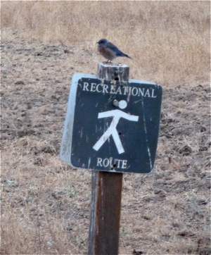 Bird on Big Dish trail sign